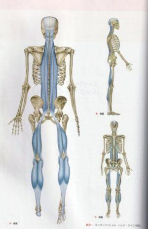 背面の筋膜のつながり